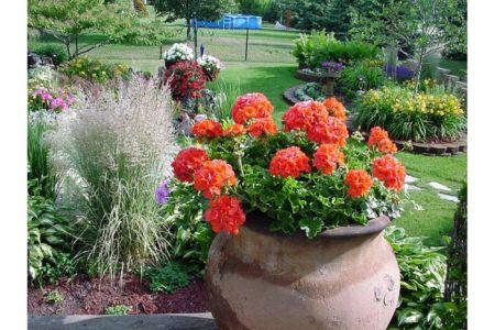 Backyard Pot